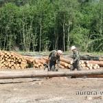 рабочие пилят деревья
